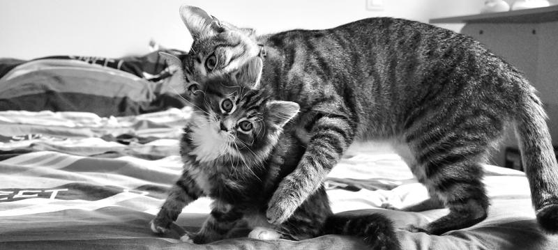 =^.^= Neko 猫 et Havana - Page 3 155110