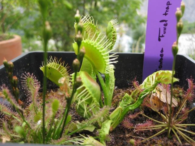 Quelques photos de mes plantes Photos13