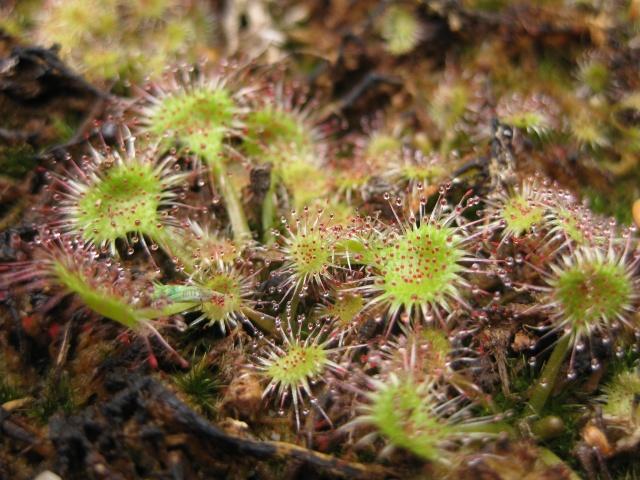Quelques photos de mes plantes Photos17