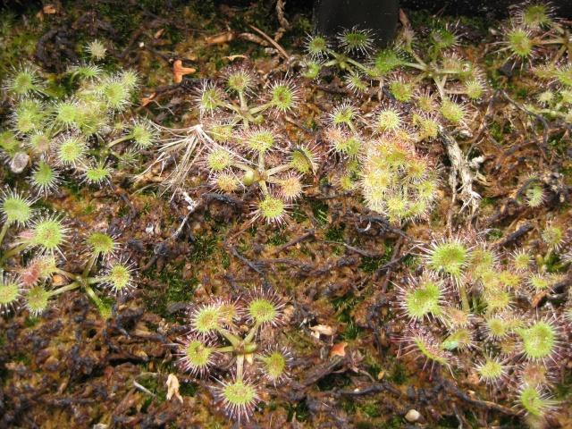 Quelques photos de mes plantes Photos18