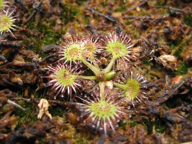 Quelques photos de mes plantes Photos19