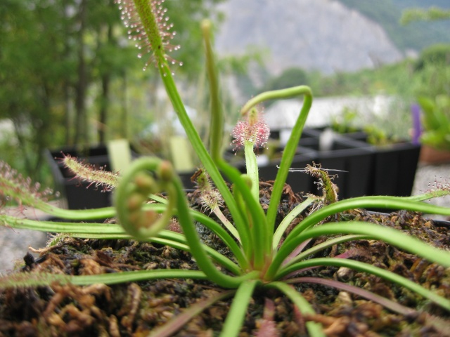 Quelques photos de mes plantes Photos20