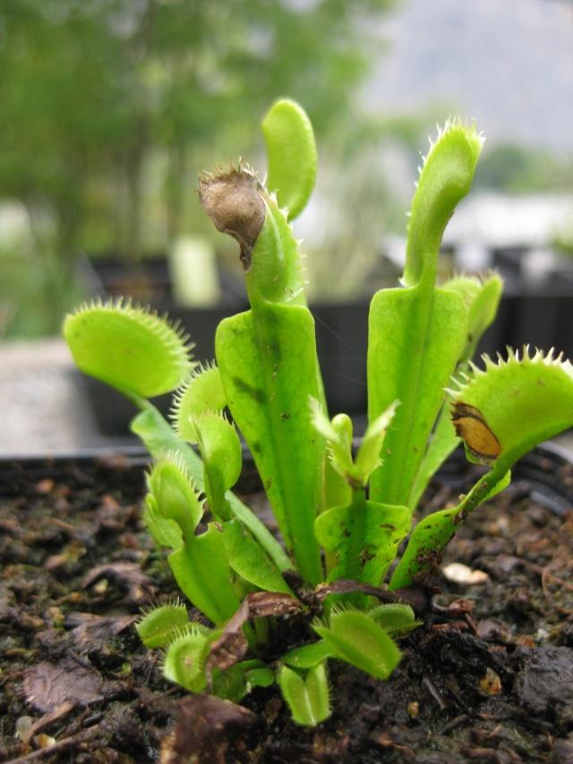 Quelques photos de mes plantes Photos23
