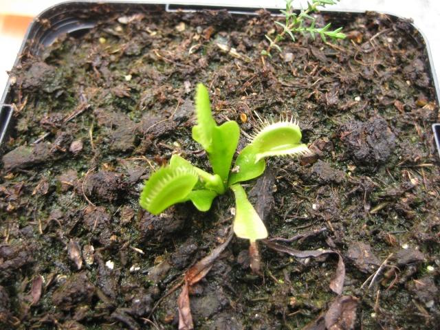Quelques photos de mes plantes Photos24