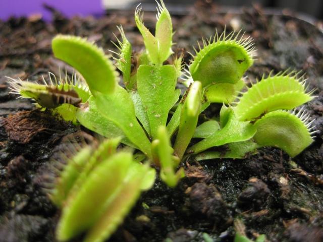 Quelques photos de mes plantes Photos25
