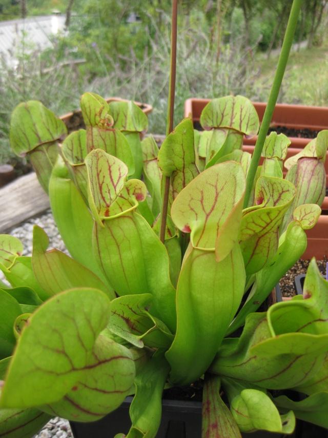 Quelques photos de mes plantes Photos31