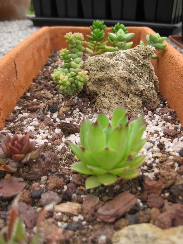 Quelques photos de mes plantes Photos35