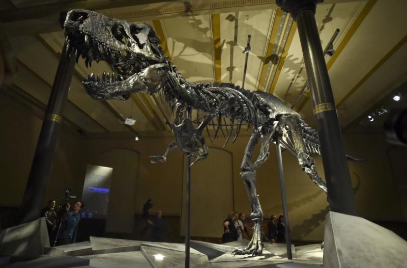 Exposition «Trix, Un T-Rex à Paris» Trista10