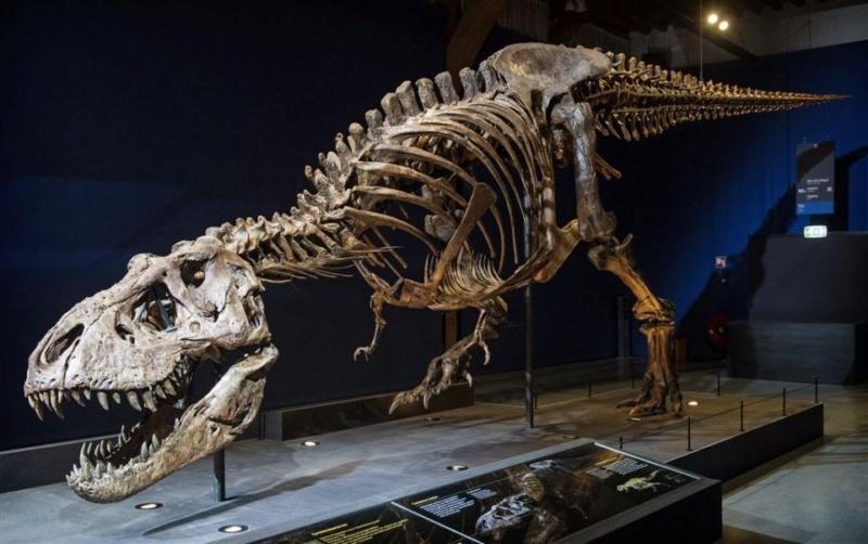 Exposition «Trix, Un T-Rex à Paris» Trix10