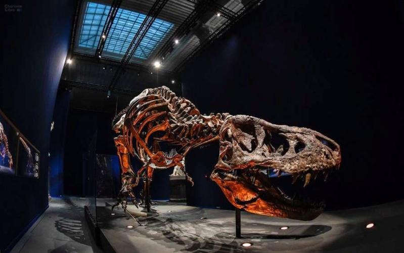 Exposition «Trix, Un T-Rex à Paris» Trix_210