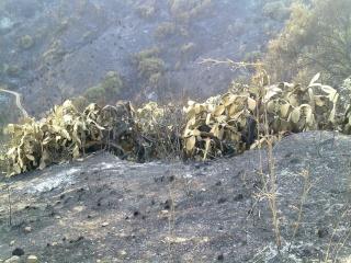Incendio en barranco blanco Ojen210