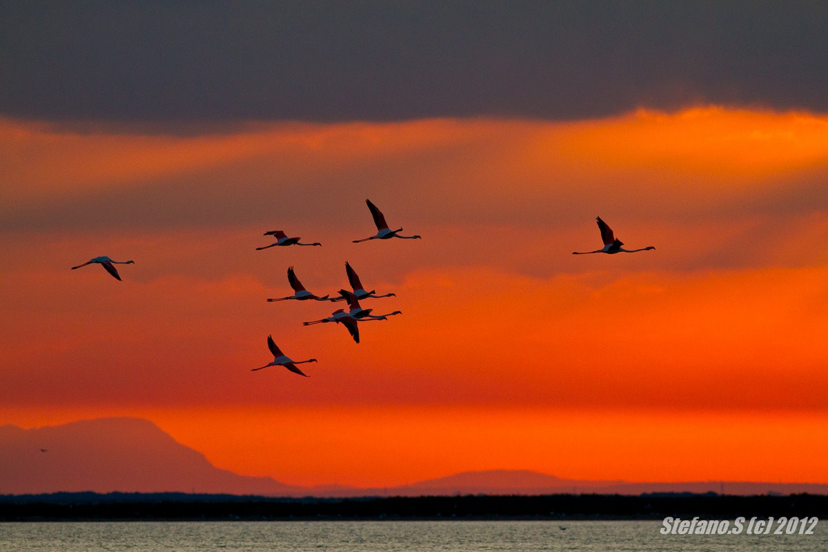 L'alba dei fenicotteri Img_1317