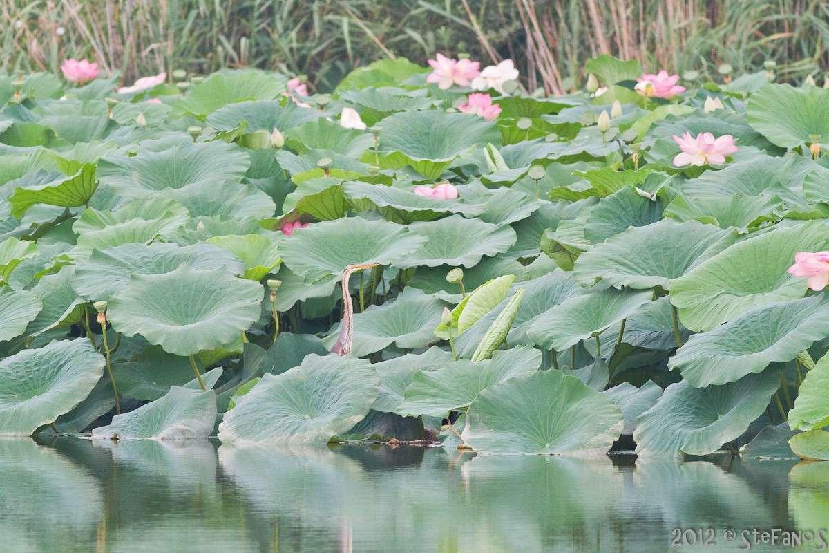 Gita in battello su Mincio e Lago superiore - reportage Img_5111