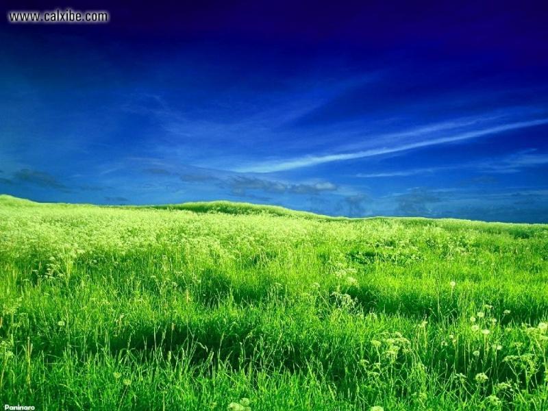 صـــــــــــــــور خـــلـفيات  Windows XP  Zealan10