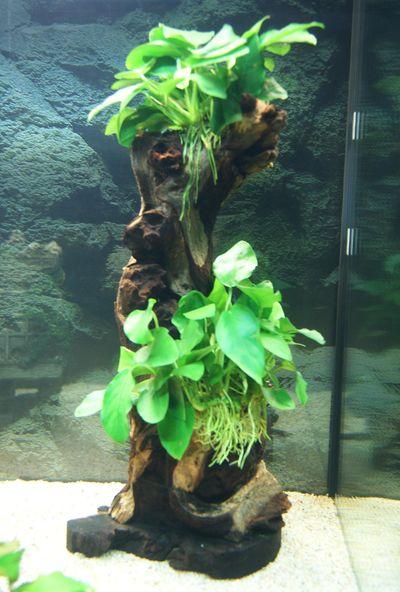 """Mon aquarium Juwel """" Lido 120 """" - Page 2 L_aqua13"""