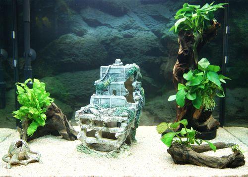 """Mon aquarium Juwel """" Lido 120 """" - Page 2 L_aqua14"""