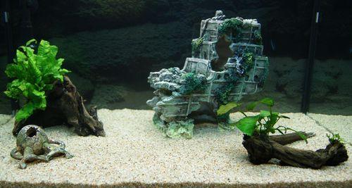 """Mon aquarium Juwel """" Lido 120 """" - Page 2 L_aqua15"""