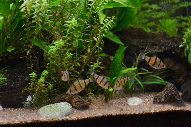 Bar aquarium 240 Litre - Page 2 Dsc_0012