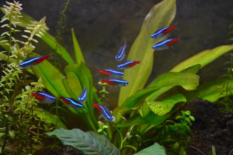 Bar aquarium 240 Litre - Page 2 Dsc_0013