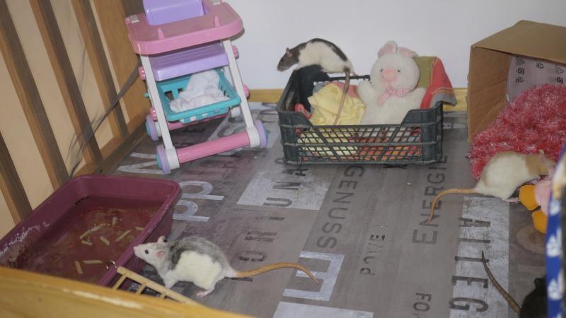 mes ratous ! P1050811
