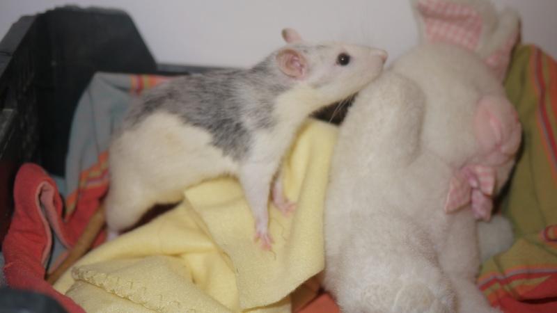 mes ratous ! P1050814