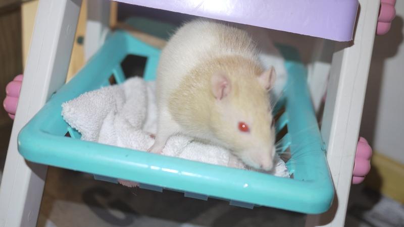 mes ratous ! P1050815