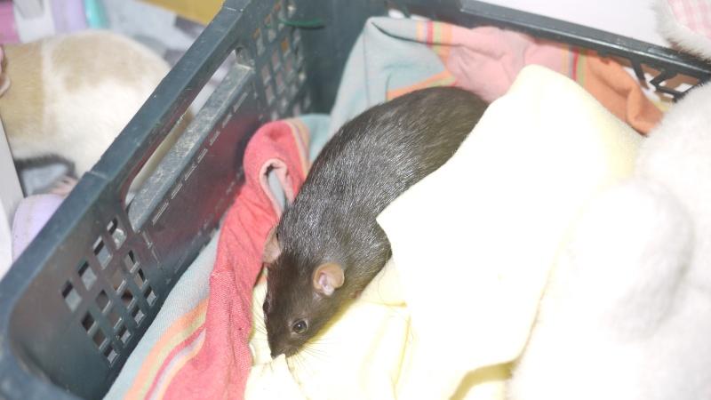 mes ratous ! P1050824