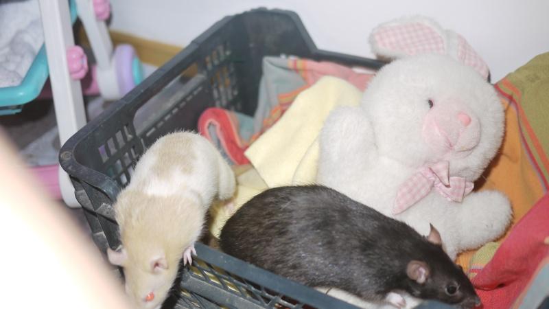 mes ratous ! P1050827