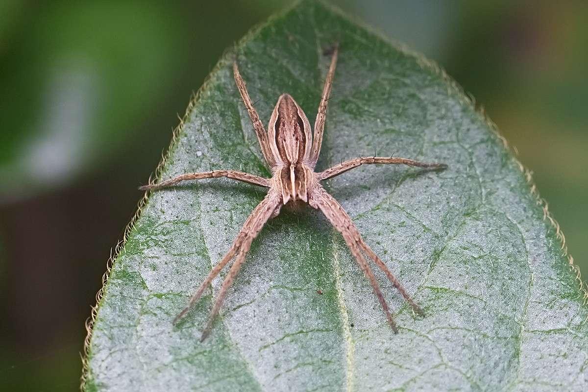 Alcuni ragni di Torrile : difficoltà di riconoscimento Ed9f2112