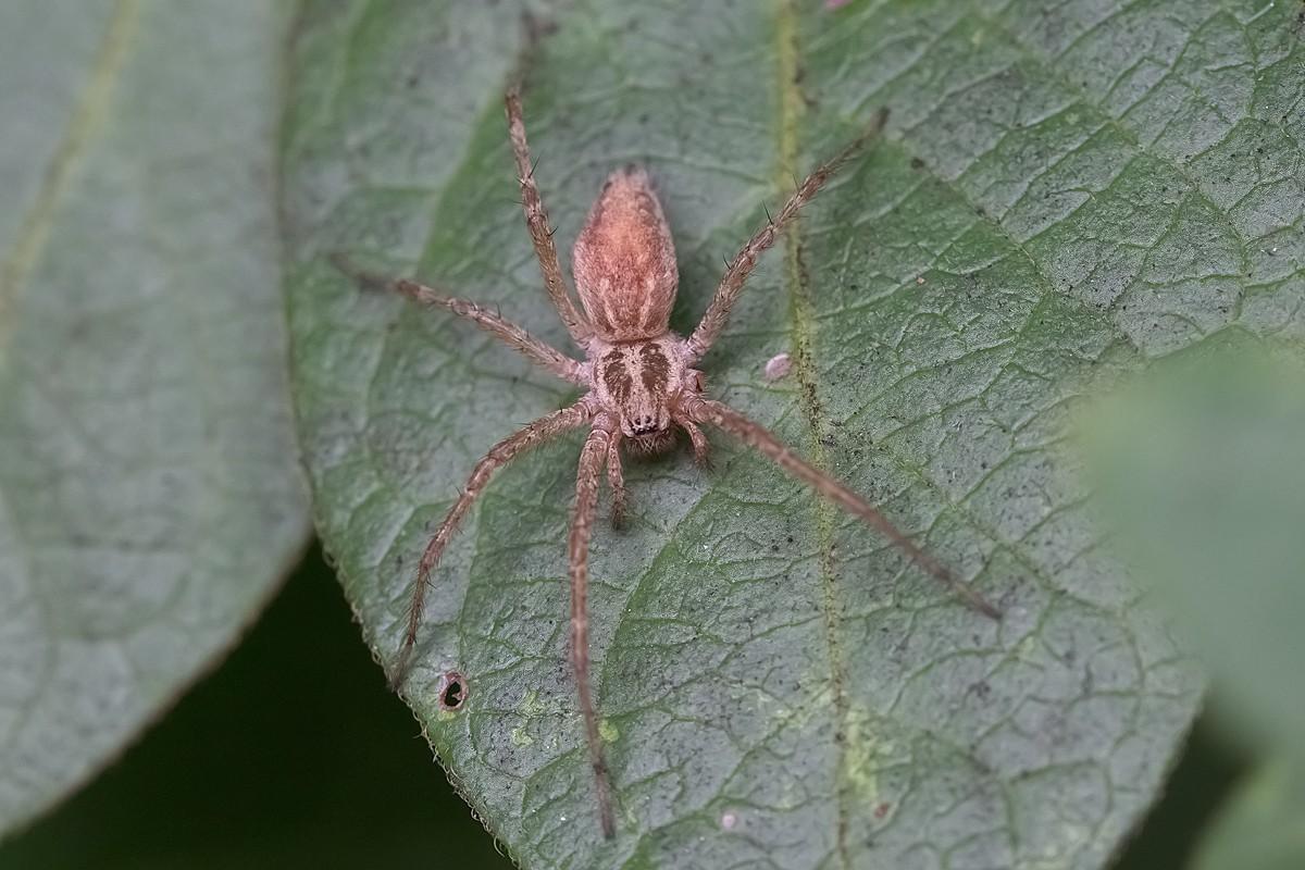 Alcuni ragni di Torrile : difficoltà di riconoscimento Ed9f2211
