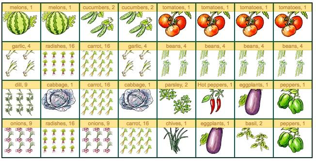 Novice gardener struggling with planning. HELP! :( Summer10