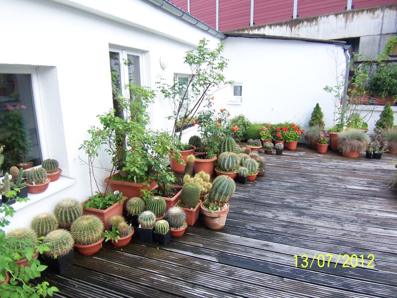 Good morning everybody, I´am a new member - a cacti lover!!! Bild1261