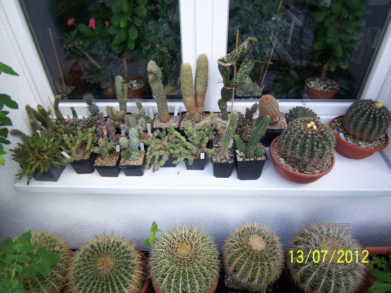 Good morning everybody, I´am a new member - a cacti lover!!! Bild1262