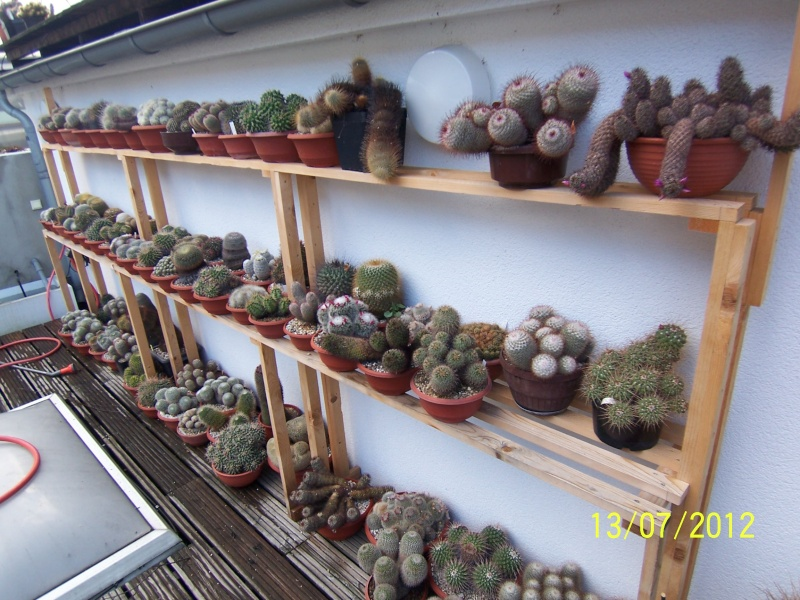 Good morning everybody, I´am a new member - a cacti lover!!! Bild1264
