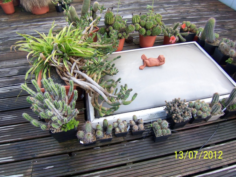 Good morning everybody, I´am a new member - a cacti lover!!! Bild1265