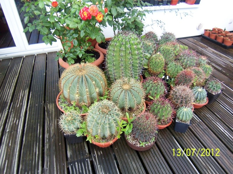 Good morning everybody, I´am a new member - a cacti lover!!! Bild1266