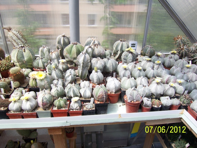 Good morning everybody, I´am a new member - a cacti lover!!! Bild1291