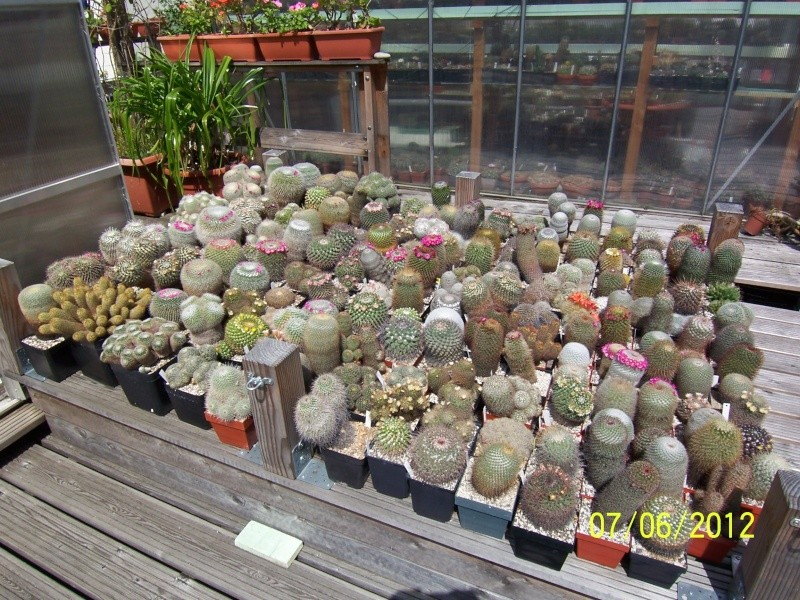 Good morning everybody, I´am a new member - a cacti lover!!! Bild1292