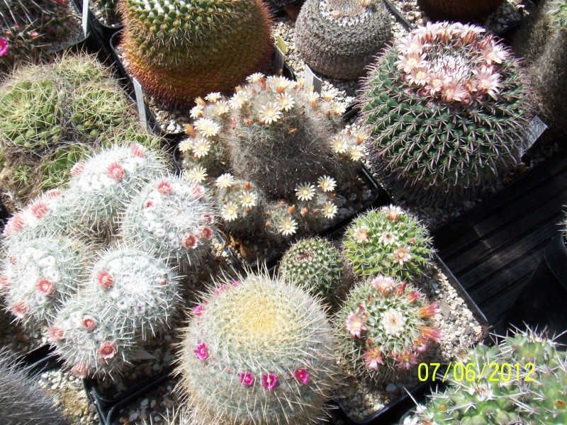 Good morning everybody, I´am a new member - a cacti lover!!! Bild1294