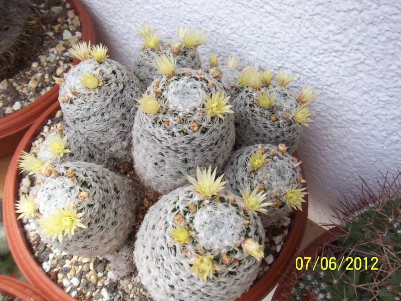 Good morning everybody, I´am a new member - a cacti lover!!! Bild1295