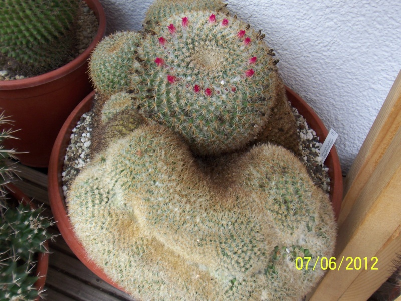 Good morning everybody, I´am a new member - a cacti lover!!! Bild1296