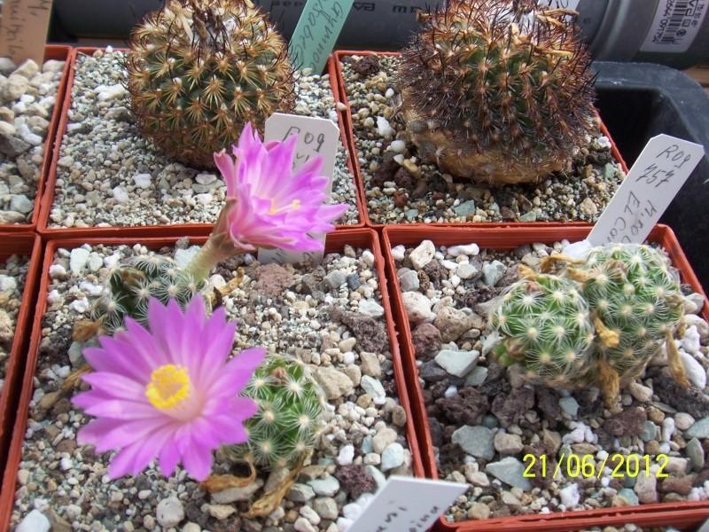 3 Mammillaria, are the names correct? Bild1482