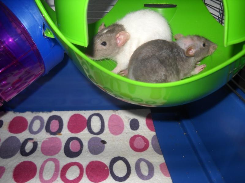 Phoebe ,Abby et June Dscn1212