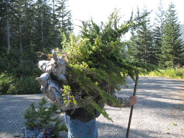 collecting hemlock in the pacific NW Img_2711