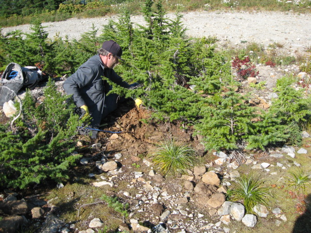 collecting hemlock in the pacific NW Img_2712