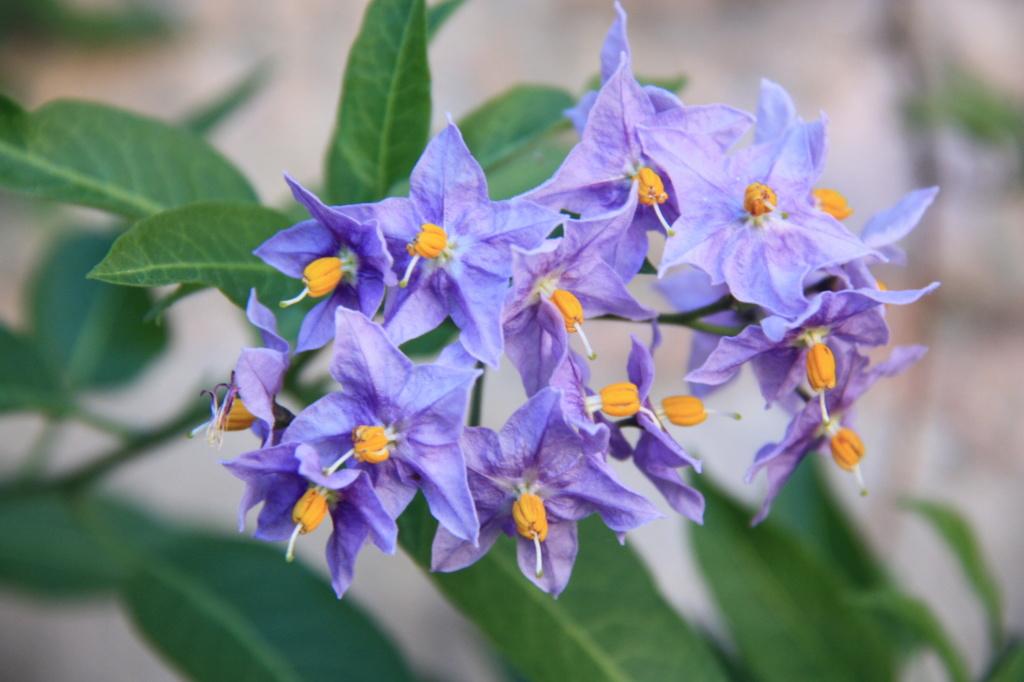 plante a identifier  Img_5010