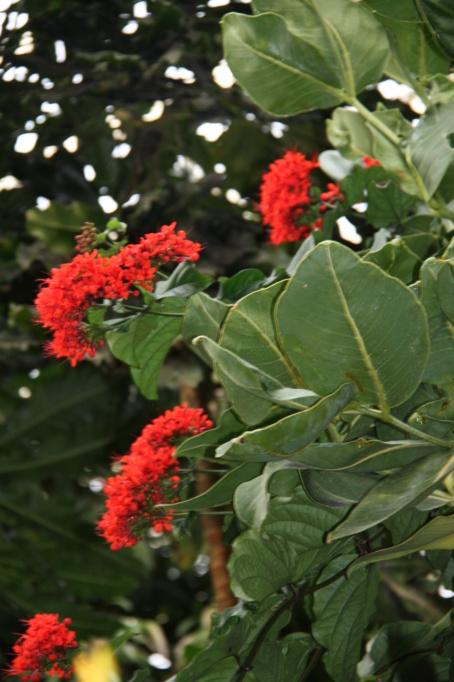 Et celle-ci?! // Gastonia cutispongia Img_6212