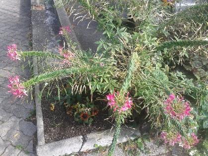 Nom de cette plante 20120910