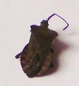 4e insecte Dsc00926