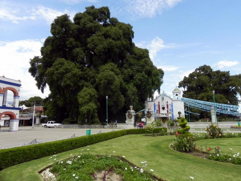 El Árbol del Tule - Santa Maria del Tule, Oaxaca Dscn3710